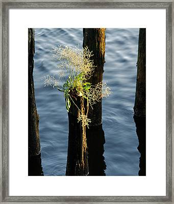 Fertile Ground Framed Print
