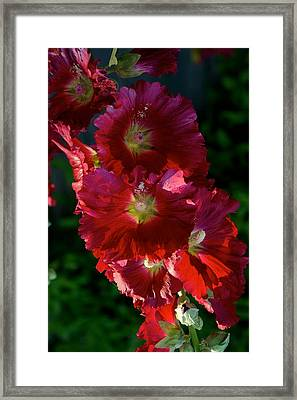 Framed Print featuring the photograph Fertile by Joseph Yarbrough
