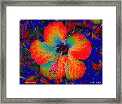 Festonned Hibiscus Framed Print