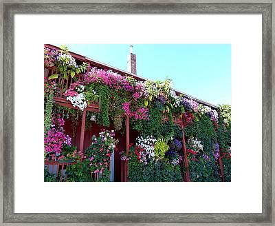 Festooned In Flowers Framed Print by Will Borden