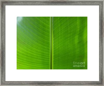 Feuille De Bananier - Ile De La Reunion Framed Print by Francoise Leandre