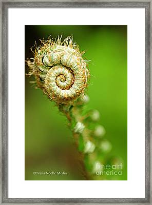 Fiddlehead Framed Print