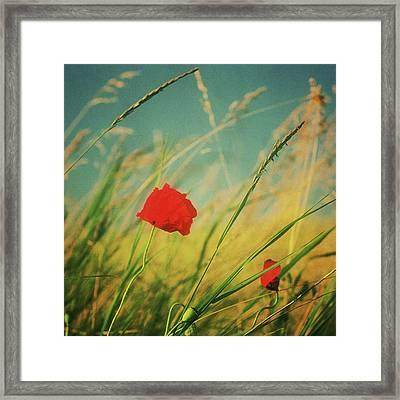 Field Framed Print by copyright Alex Arnaoudov