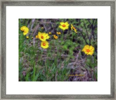 Framed Print featuring the photograph Field Flowers by Joan Bertucci