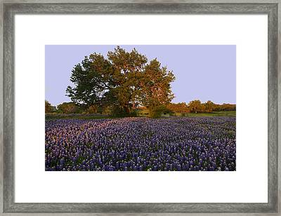Field Of Blue Framed Print