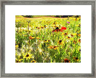 Field Of Bright Colorful Wildflowers Framed Print by Anne Mott