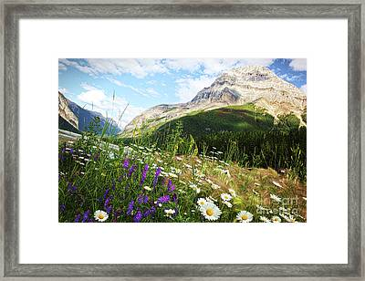 Field Of Daisies And Wild Flowers Framed Print by Sandra Cunningham