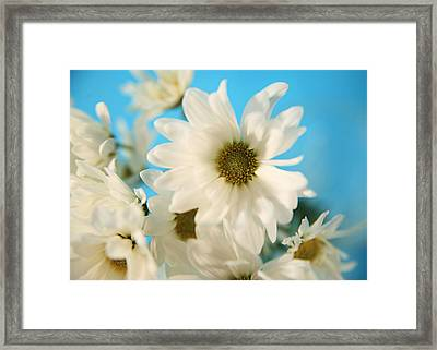 Field Of Daisies Framed Print by Mary Broughton