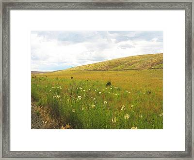 Field Of Dandelions Framed Print by Anne Mott
