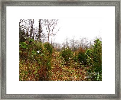 Field Of Dreaminess Framed Print by Doug Kean