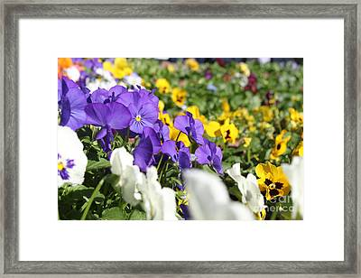 Field Of Dreams Framed Print by Nathan Grisham