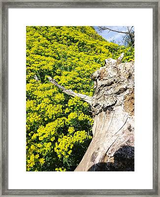 Framed Print featuring the photograph Field Of Flowers 1 by Gerald Strine