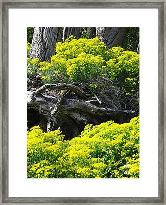 Framed Print featuring the photograph Field Of Flowers 2 by Gerald Strine