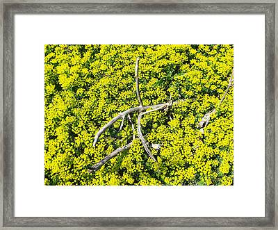 Framed Print featuring the photograph Field Of Flowers 3 by Gerald Strine