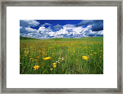 Field Of Flowers, Grasslands National Framed Print by Robert Postma