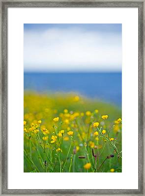 Field Of Flowers In Front Of The Sea Framed Print by Sindre Ellingsen