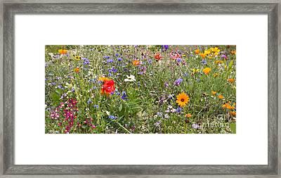 Field Of Flowers Framed Print by Jo