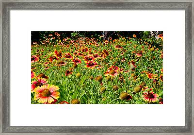 Field Of Flowers Framed Print by Mike Rivera