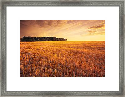 Field Of Grain Stubble Near St Framed Print by Dave Reede
