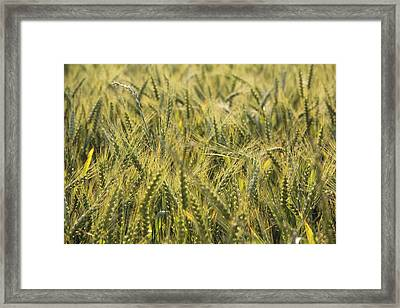 Field Of Green Framed Print