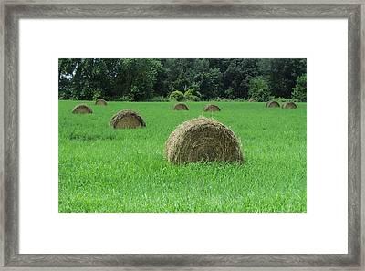 Field Of Hay Framed Print by Todd Sherlock