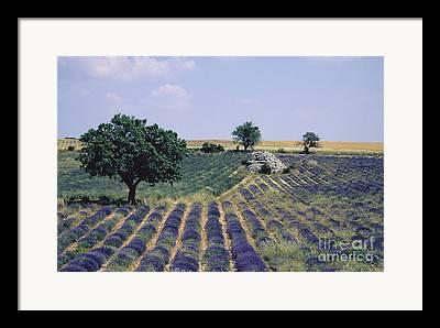 Plateau De Sault Framed Prints