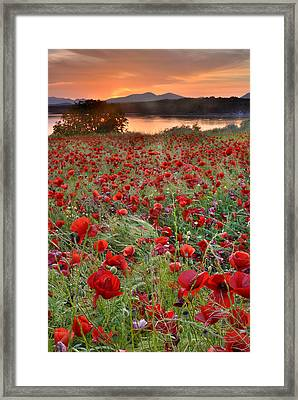 Field Of Poppies Framed Print by Guido Montanes Castillo