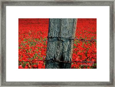 Field Of Poppies With A Wooden Post. Framed Print by Bernard Jaubert