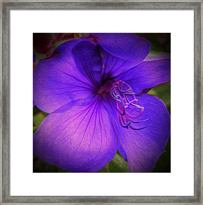 Field Of Purple Framed Print by Jeanean Gendron