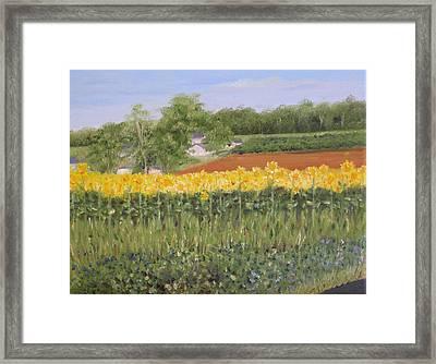 Field Of Sunflowers Framed Print