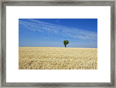 Field Of Wheat In Provence Framed Print