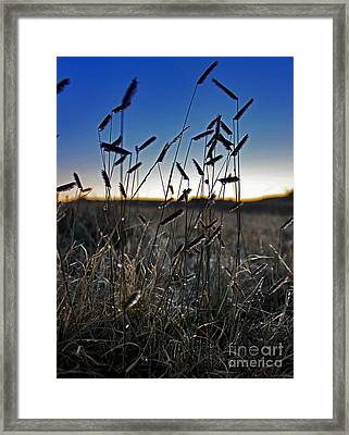 Field Of Wierdness Framed Print by Wesley Hahn