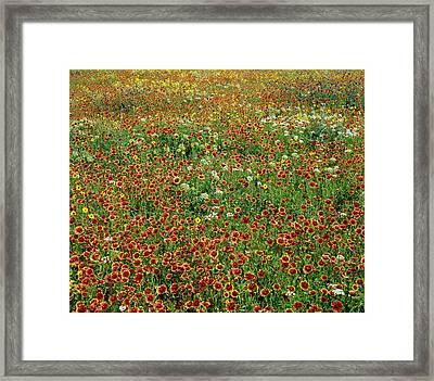 Field Of Wildflowers Framed Print by David Chapman