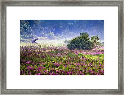 Field With Purple Flowers Framed Print by Brian Lee