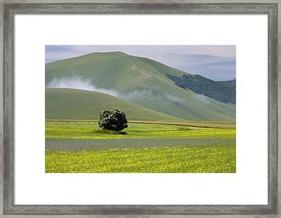Fields Full Of Cornfield Weeds Framed Print by Bob Gibbons