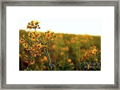 Fields Framed Print by Jessica Smith