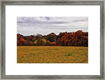 Fields Of Gold Framed Print by Bill Cannon