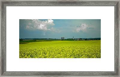 Fields Of Gold ... Framed Print