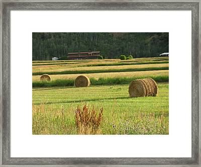 Fields Of Gold Framed Print by Shawn Hughes