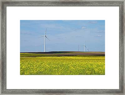 Fields Of Gold Framed Print by Straublund Photography