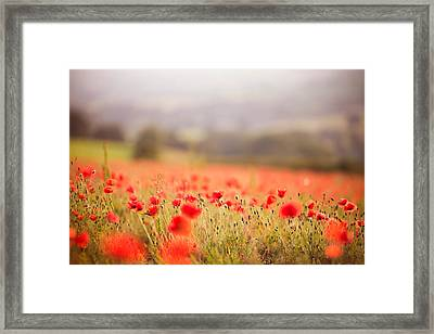 Fields Of Wild Poppies Framed Print by Olivia Bell Photography