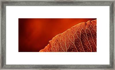 Fifty Shades Of Red Framed Print by John Hamlon