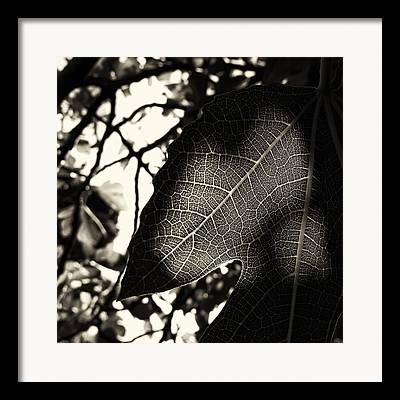 Figtree Framed Prints