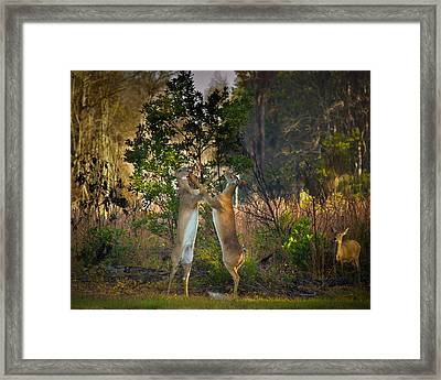 Fight Club Framed Print by Christopher Mobley