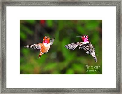 Framed Print featuring the photograph Fight Time by Jack Moskovita