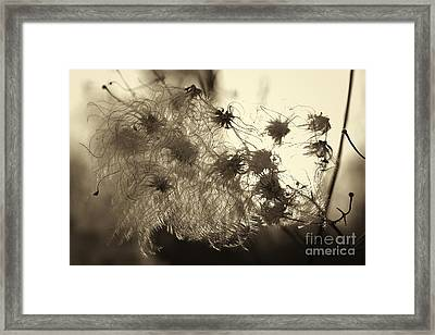 Framed Print featuring the photograph Filaments by Eunice Gibb