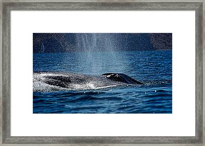 Framed Print featuring the photograph Fin Whale Spouting by Don Schwartz