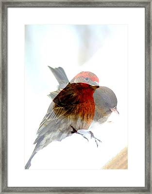Finch And Junko Framed Print by Rick Rauzi