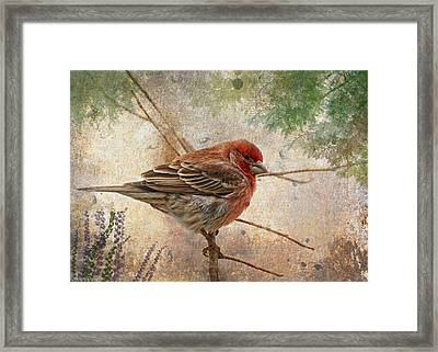 Finch Art Or Greeting Card Blank Framed Print by Debbie Portwood