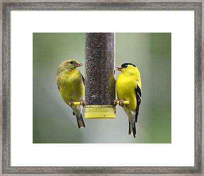 Finch Couple Framed Print